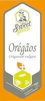Oregãos - origanum vulgare