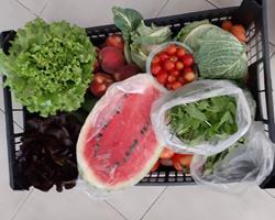 Cabaz de Legumes & Fruta 11Kg