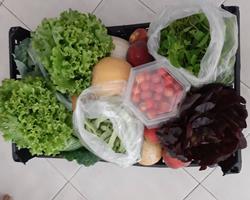 Cabaz de Legumes & Fruta 16Kg