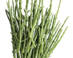 Sarcocórnia RiaFresh® fresca 250g