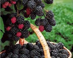 Mix de Frutos Vermelhos, emb. 200g