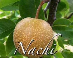 Pêras Nashi Biológicas, a granel
