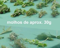 Erva-cidreira Bio, molhos de 30g