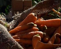 Cenoura com Rama, molho de 300g