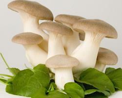 Cogumelo do Cardo biológico, emb. 250g