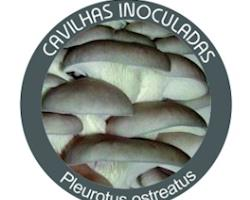 Cavilhas inoculadas de Cogumelos Pleurotus ostreatus