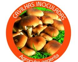 Cavilhas inoculadas de Cogumelo BIO Agrocybe aegerita