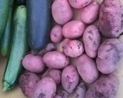 Batatas Vermelhas Bio