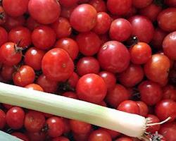 Tomates Cereja Mini Chucha Biológicos