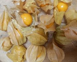 Physalis c/ Campânula 1 kg