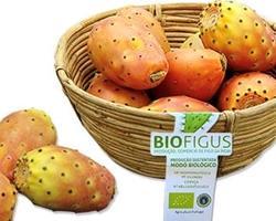 Figo da Índia Biológico - variedade Amarela/branca, laranja e roxa