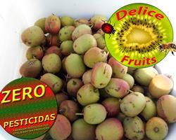 Super Fruta Baby Kiwi ZERO PESTICIDAS, mais doce e mais nutrientes, pele comestível