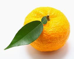 Limão Yuzu ZERO PESTICIDAS