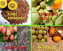 Sementes Caviar, Physalis, Kiwi, Yuzu, Zero Pesticidas- Portes Gratis