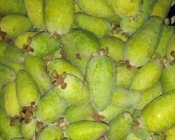 Feijoa | Goiaba Ananas