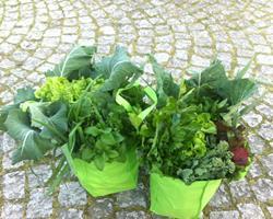 Bio Cabaz de Legumes e Fruta da Época, Peso: 10 a14 Kg
