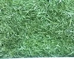 Caldo Verde