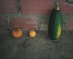 varios produtos biologicos, cenouras, aboboras, feijao verde (coco)