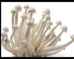 Shimeji - Cogumelos BIO