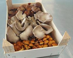 Cabaz MIX Premium - Cogumelos Biológicos Frescos