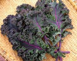 Kale roxa