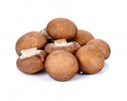 Cogumelo Champignon Marron