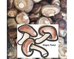 Cogumelo shiitake biológico certificado