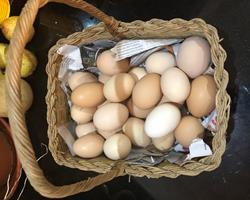 Ovos de raças autóctones portuguesas, animais certificados pela AMIBA