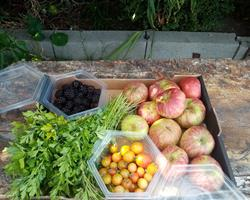 Cabaz fruta e legumes