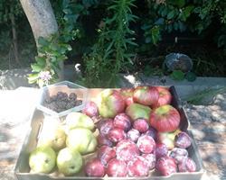 Cabaz de fruta