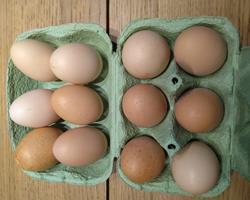 Ovos consumo BIO - Galinhas Raças Autóctones Portuguesas