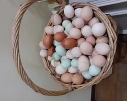 Ovos de consumo