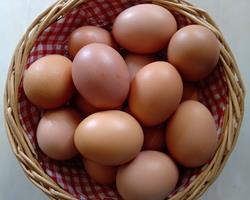 Ovos de galinha criada ao ar livre