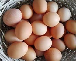 Ovos caseiros de galinha e pata