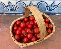 Tomate Cereja Vermelho Biológico