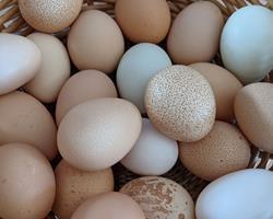 Ovos caseiros de galinha