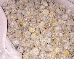 Figos secos