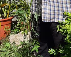 Planta Maracujá Morango