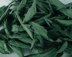 Stevia folha seca