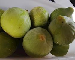 Figos Pingo de Mel