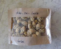 Flor de figo-da-índia seca
