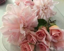 Rosas Santa Teresinha