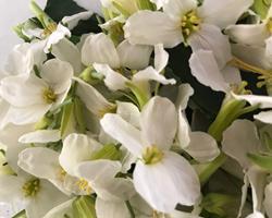 Flor de couve