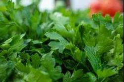 Salsa (petroselinum crispum)