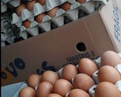Ovos certificados, criação extensiva - slow food