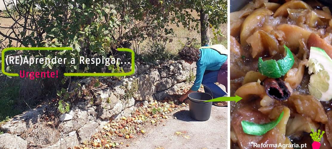 maçãs em decomposição no solo, no interiopr de Portugal