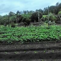 Horta do Garcia