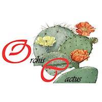 Orchis Cactus