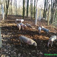 Verdes Desafios, Agricultura Agroturismo, Lda.
