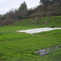 Hortícolas Abelheira